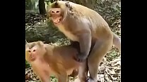 Funny a. hindi sex video