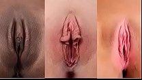 Tipos y figuras de vajinas